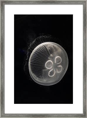 Moon Jelly Japan Framed Print by Hiroya Minakuchi