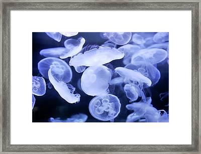 Moon Jellyfish Framed Print