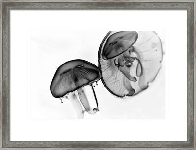 Moon Jellyfish - Black And White Framed Print by Marianna Mills