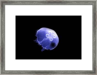 Moon Jellyfish Framed Print by David Simons