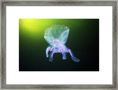 Moon Jellyfish Eversion Framed Print