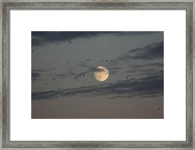 Framed Print featuring the photograph Moon Lighting The Way by Paula Brown