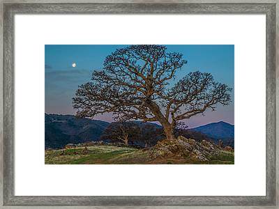 Moon Oak And Mt Diablo Framed Print by Marc Crumpler