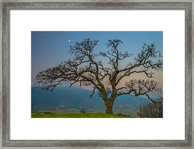 Moon Over Big Oak Framed Print by Marc Crumpler