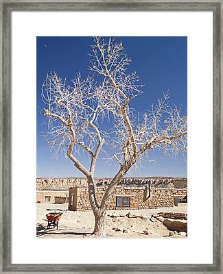 Moon Over Cottonwood Framed Print by Jennifer Nelson