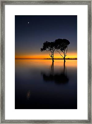 Moon Over Mangrove Trees Framed Print by Robert Charity