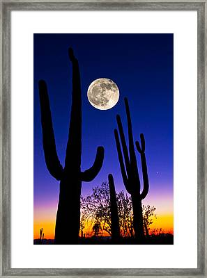 Moon Over Saguaro Cactus Carnegiea Framed Print by Panoramic Images