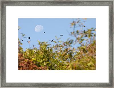 Moon Over The Dunes Framed Print