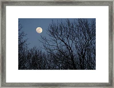 Moon Over Trees Framed Print