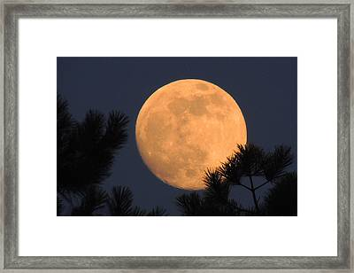 Framed Print featuring the photograph Moon Pines by Charlotte Schafer