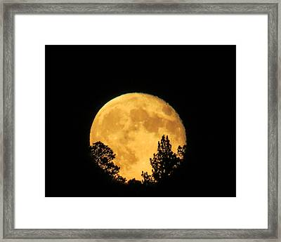 Moon Rise Over Pines Framed Print by Dawn Key