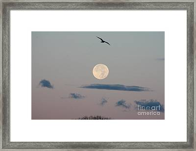 Moon Setting Over Oceanside Framed Print by John Telfer