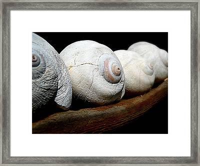 Moon Shells Framed Print by Micki Findlay