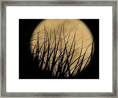 Moon Through The Palms Framed Print by Zina Stromberg