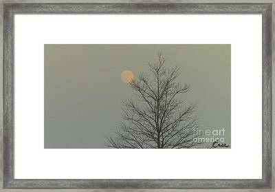 Moon Tree Fall Haze 12 10 2011 Framed Print by Feile Case