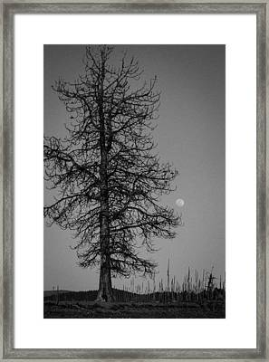 Moon Tree Framed Print by Jan Davies