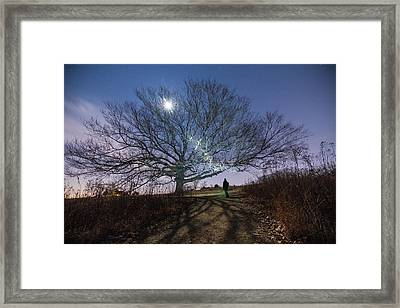 Moon Tree Framed Print by Kristopher Schoenleber
