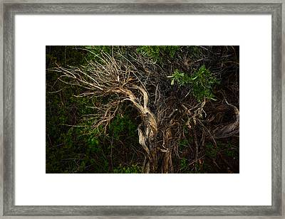 Moondance Framed Print by Roger Chenery