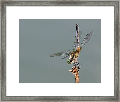 Mooned By A Dragon Framed Print