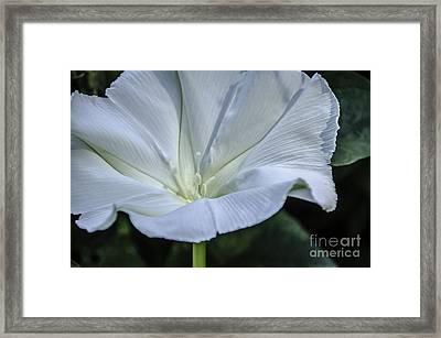 Moonflower 1 Framed Print
