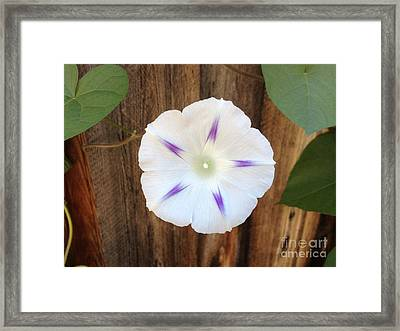 Moonflower On Wood Framed Print by Tayt Dame