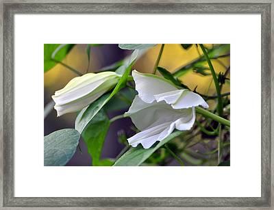 Moonflowers  Framed Print by Gail Butler