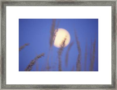 Moongrass Framed Print by Ken Dietz