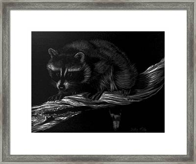 Moonlight Bandit Framed Print
