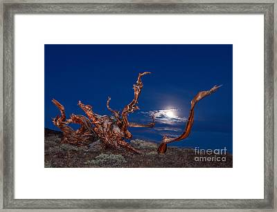 Moonlight Dance - Light Painting Night View Of The Ancient Bristlecone Pine Forest Tree. Framed Print