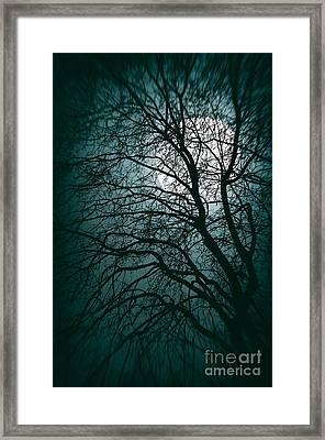 Moonlight Forest Framed Print