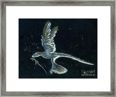 Moonlight Hunt - Microraptor Framed Print