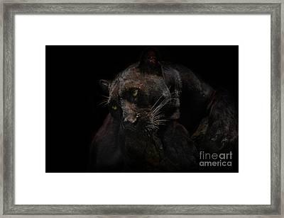 Moonlight Musings Framed Print