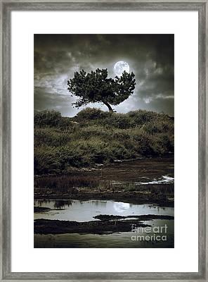 Moonlight Swamp Framed Print by Carlos Caetano