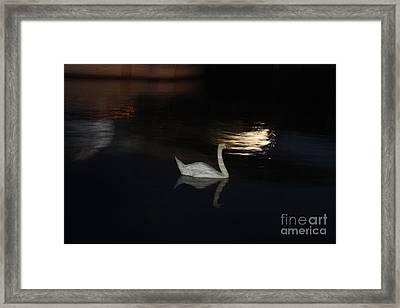 Moonlight Swan Framed Print by John Telfer
