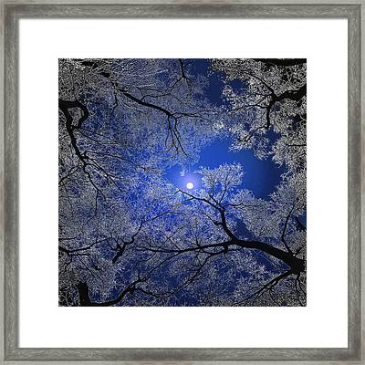 Moonlight Trees Framed Print by Igor Zenin