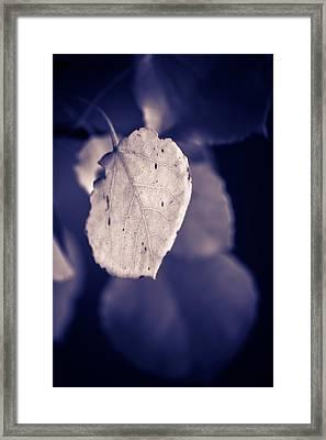 Moonlit Aspen Leaf Framed Print by Dave Garner
