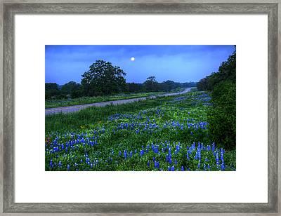 Moonlit Bluebonnets Framed Print by Tom Weisbrook