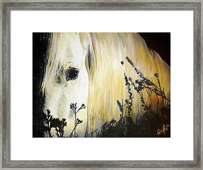 Moonlit Horse Framed Print by Caroline  Reid