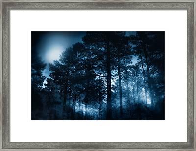 Moonlit Night Framed Print