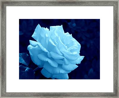 Moonlit Rose Framed Print by Cathy Jourdan
