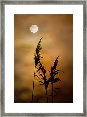Moonlit Stalks Framed Print by Gary Heller