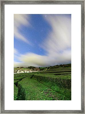 Moonlit Tea Plantation Framed Print by Babak Tafreshi
