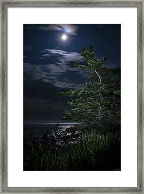 Moonlit Treescape Framed Print by Marty Saccone