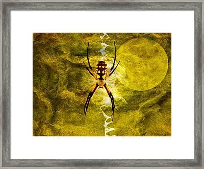 Moonlit Web Framed Print by J Larry Walker