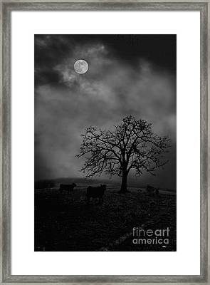 Moonlite Tree On The Farm Framed Print by Dan Friend