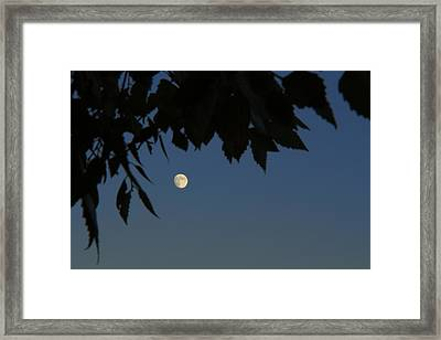 Moonrise Framed Print by Andrea Kappler