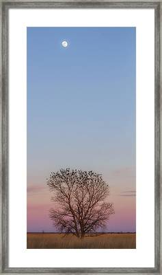 Framed Print featuring the photograph Moonrise Over Blackbirds by Rob Graham