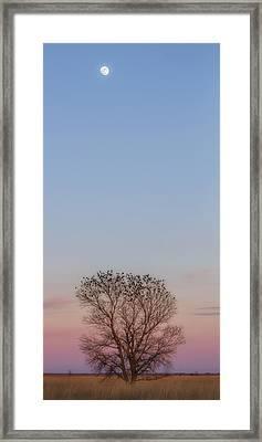 Moonrise Over Blackbirds Framed Print by Rob Graham