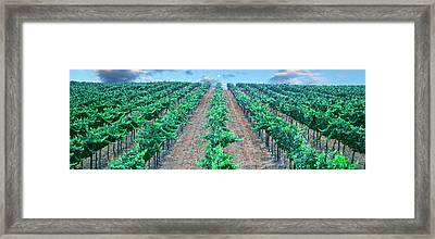 Moonrise Over Vineyard, Temecula Framed Print by Panoramic Images