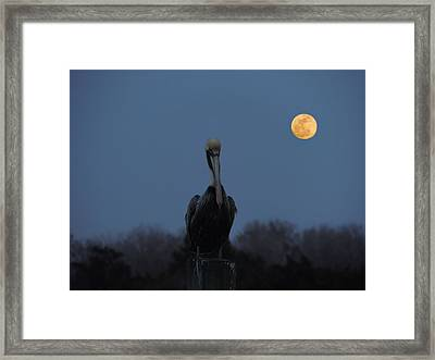 Framed Print featuring the photograph Moon's Up by Laura Ragland